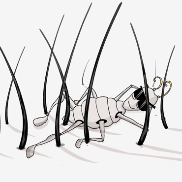 Learn How to Draw a Louse (Insects) Step by Step : Drawing Tutorials
